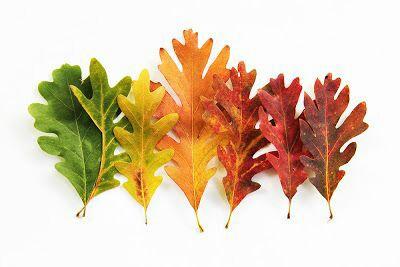 Jesienne liście – spostrzeganie położenia przedmiotów w przestrzeni