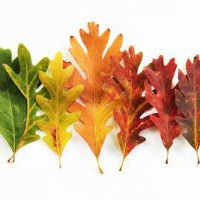 Jesienne liście - spostrzeganie położenia przedmiotów w przestrzeni